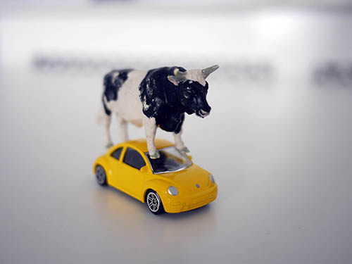 Cow and car, photography by Jay Rechsteiner