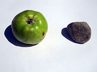 photograph of an apple and a stone by Jay Rechsteiner